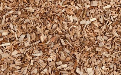 What is Cork Leather?